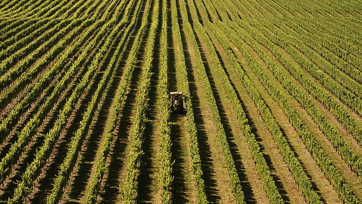 winegrowing-vines-agriculture-new-zealand-preview.jpg